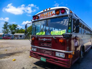 Die Busse in Belize