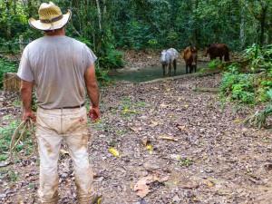 Joe mit seinen Pferden