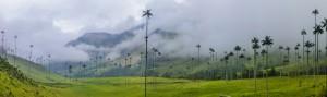 Salento - Valle del Cocora
