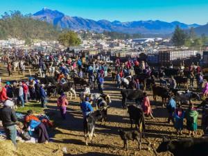 Otavalo Viehmarkt