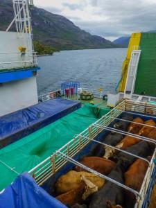 Fähre Puerto Natales-Puerto Montt