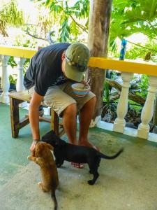 Tikehau - Süssen jungen Hunde