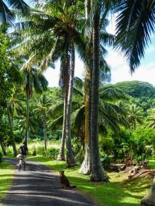 Rarotonga - Raffi