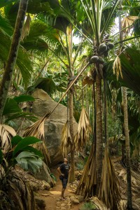 Praslin - Vallée de Mai Nature Reserve