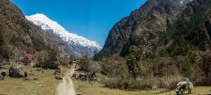 Sherpagaon 2563m - Langtang 3541m