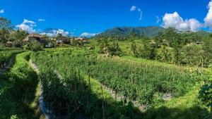 Sicht auf GuSidemen - Sawah Indah Villanung Agung 3031m